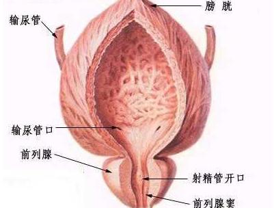 右下腹部隐痛的原因怎么回事